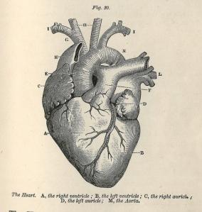 Hygenic Physiology